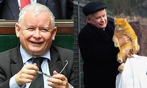 """Koty dostaną trzynastkę od Kaczyńskiego. """"Wszyscy wiedzą, że duża jest miłość pana prezesa do zwierząt"""""""