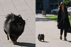 Czarek Lis szaleje na widok paparazzi (WIDEO)