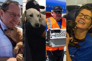 Linie lotnicze uratowały bezdomne zwierzęta przed skutkami huraganu Harvey! (ZDJĘCIA)