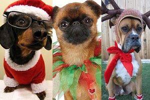 Pudelek na święta: psy i ich świąteczne przebrania (ZDJĘCIA)