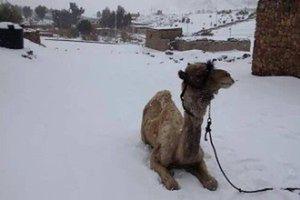 Egipt w szoku. Śniegu nie było od 112 lat!