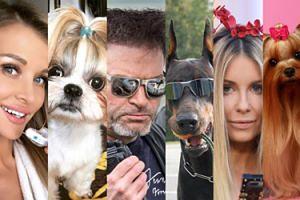 Dzień Psa w Pudelku: Gdyby celebryci byli czworonogami... (ZDJĘCIA)