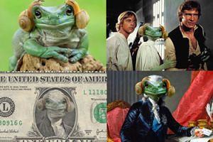 Hit internetu: Ta żaba wygląda jak księżniczka Leia (ZDJĘCIA)