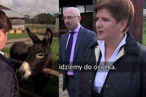 """Beata Szydło na wsi: """"Krowy za nami patrzą. Chodźmy do osiołka. CZEŚĆ OSIOŁEK!"""""""