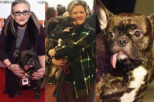 Pies Carrie Fisher ma już nową właścicielkę!