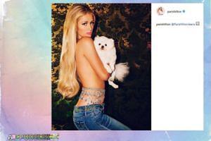 Paris Hilton zasłania biust psem