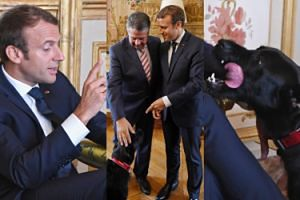 Macron zabrał psa na spotkanie dyplomatyczne! (ZDJĘCIA)