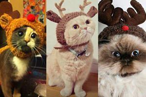 Koty przebrane za renifery! (ZDJĘCIA)