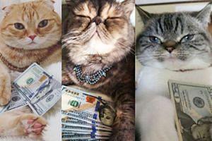 Nowy hit sieci: Koty pozują z pieniędzmi… (ZDJĘCIA)