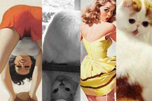 Hit sieci: koty wyglądające jak pin-up girls (ZDJĘCIA)