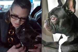 Pies Carrie Fisher tęskni za swoją panią (ZDJĘCIA)