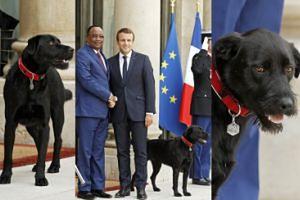 Emmanuel Macron ADOPTOWAŁ PSA! (ZDJĘCIA)