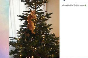 Kot Michała Żebrowskiego poczuł święta