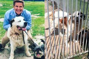 """Filip Chajzer NIE ADOPTOWAŁ psów mimo zapowiedzi. """"W przypływie emocji powiedział, że je adoptuje, ale po konsultacjach z partnerką wycofał się"""" (TYLKO U NAS)"""