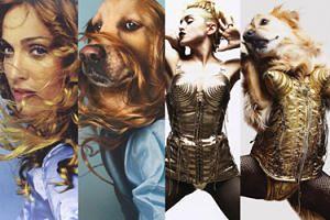Nowa gwiazda Internetu: Pies, który... UDAJE MADONNĘ! (ZDJĘCIA)