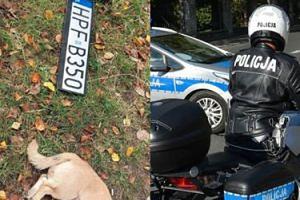 Pies zabity w Łodzi przez rozpędzony RADIOWÓZ POLICYJNY. Kierowca nie zatrzymał się, aby udzielić pomocy