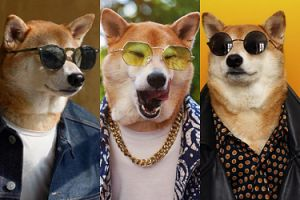 Bodhi to najmodniejszy pies świata. Zobaczcie jego stylizacje!