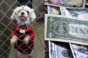 """Polka mieszkająca w Chicago zapisała w spadku 100 TYSIĘCY DOLARÓW bielskiemu schronisku dla zwierząt! """"Cuda się zdarzają"""""""