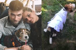 Suczka Zofii Zborowskiej miała... WŁASNĄ SUKNIĘ na ślubie swojej pani! Stylowa? (FOTO)