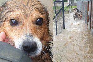 Pudelek apeluje: psom z Wadowic potrzebna jest natychmiastowa pomoc!