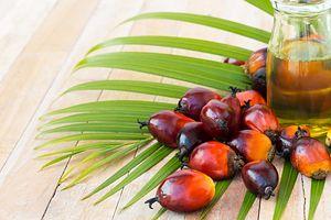 Olej Palmowy Produkcja Właściwości Kalorie I Wartości