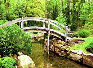 Ogród japoński – jakie rośliny wybrać do ogrodu w stylu japońskim?