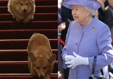 Nie żyje ukochany pies królowej Elżbiety