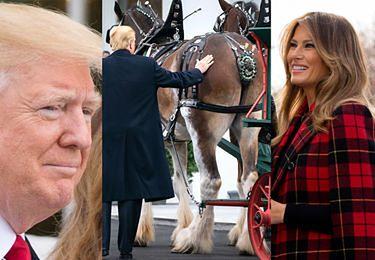 Donald Trump czule gładzi świątecznego konia po zadzie (ZDJĘCIA)