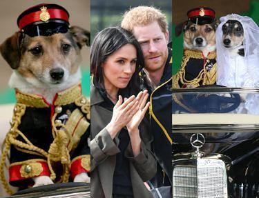 """""""Pieskie royal wedding"""": Jacob i Jessica też wzięli królewski ślub. Ładna z nich para?"""