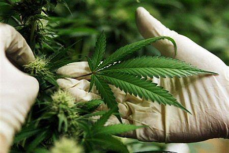 podłączenie marihuany randki z gorsetem