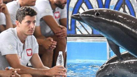 Polska reprezentacja wizualizuje sobie zwycięstwo w towarzystwie delfinów