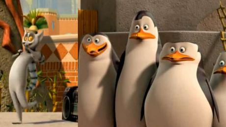 Pingwiny z Madagaskaru o Koko Euro Spoko