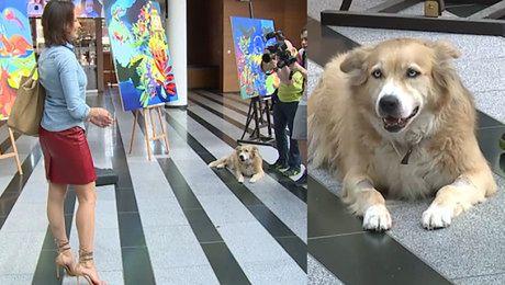 Anna Popek z psem w Pytaniu na śniadanie