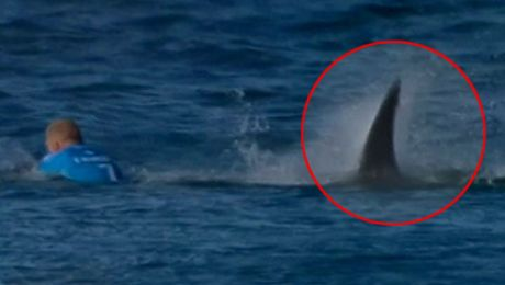 Rekiny zaatakowały surfera W trakcie relacji na żywo