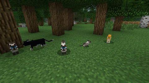 Minecraft: wreszcie ktoś docenił koty!
