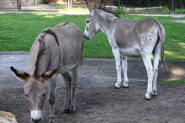Serwis randkowy w zoo