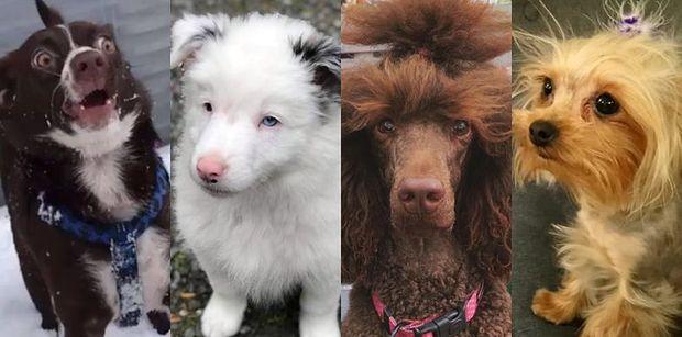 14. urodziny Pudelka: Poznajcie czworonożnych laureatów naszego psiego konkursu! (ZDJĘCIA)