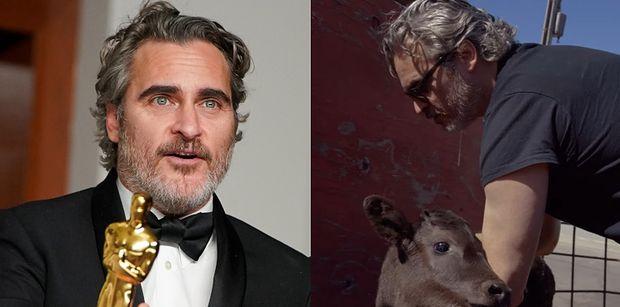 Joaquin Phoenix uratował krowę i cielę przed niechybną ŚMIERCIĄ W RZEŹNI dzień po odebraniu Oscara