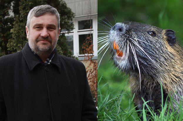"""Minister rolnictwa chce uznać bobry i żubry za JADALNE: """"Płetwa bobra ma ponoć właściwości afrodyzjaków"""""""