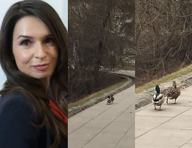 """Kaczyńska podziwia spacerujące kaczki. """"Jak mąż i żona"""""""