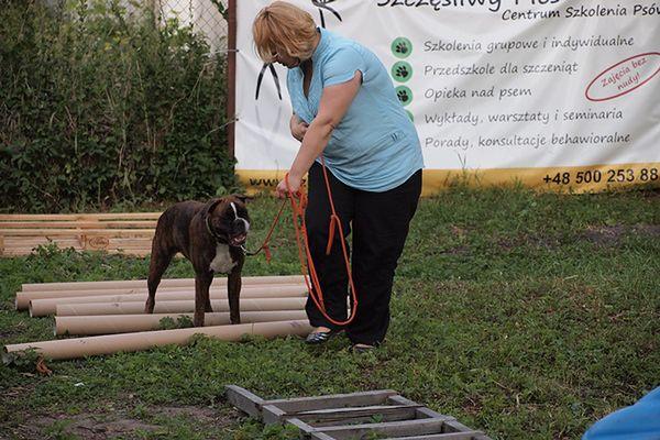 Szkolenie psów z chodzenia na luźnej smyczy
