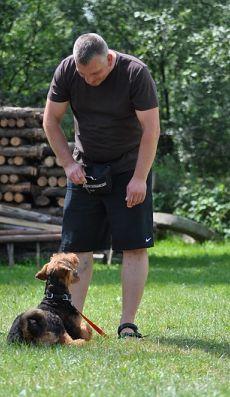 Psy podczas szkolenia