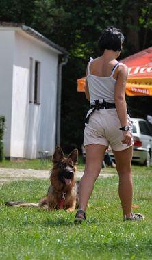 Psy uczą się  posłuszeństwa w różnych okolicznościach
