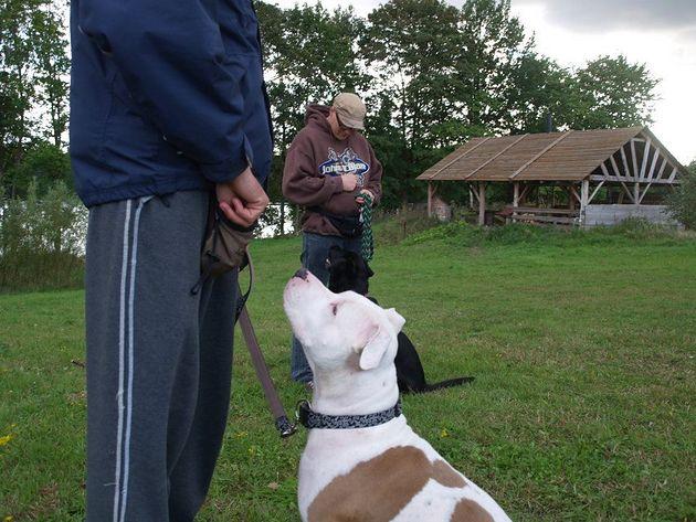 pies patrzy na właściciela