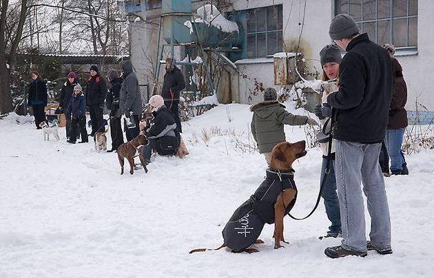 Nauka prawidłowego spacerowania z psem