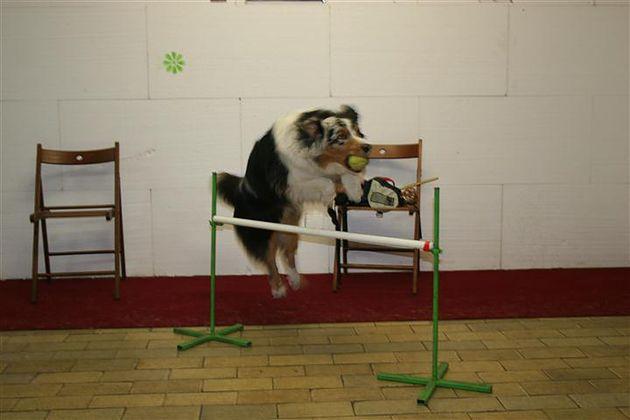 Nauka posłuszeństwa dla psa