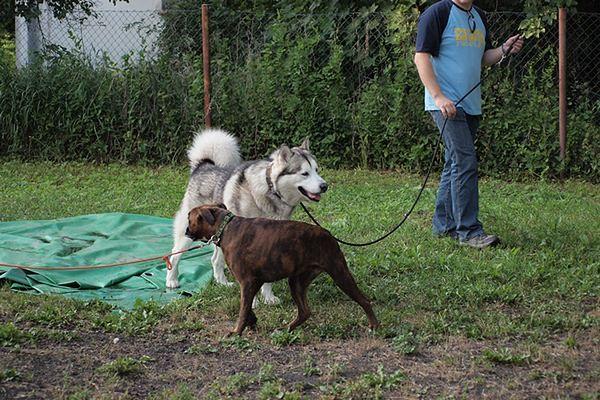 Spacerowanie z psami