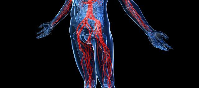 Anatomia Człowieka Wp Abczdrowie