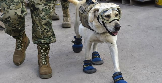 Frida - pies ratownik
