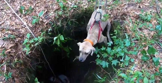 Pies wydobywany z jaskini